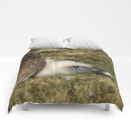 Griffon vulture Comforters
