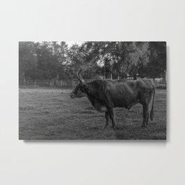 Guard Bull Metal Print