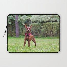 Outdoor portrait of a red miniature pinscher dog Laptop Sleeve