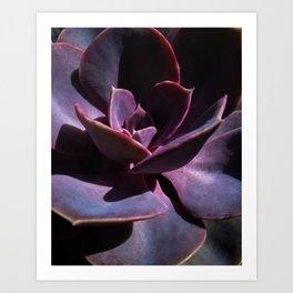 Succulent 2 Art Print