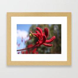 Red Furry Flower Framed Art Print