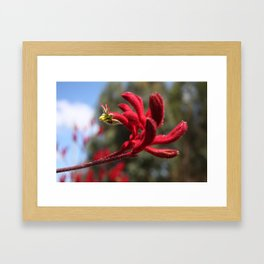 Red Furry Flower Framed Art Print