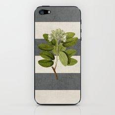 botanical stripes 5 -gray iPhone & iPod Skin
