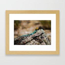 Collard Lizard Framed Art Print