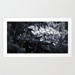 Florette Art Print