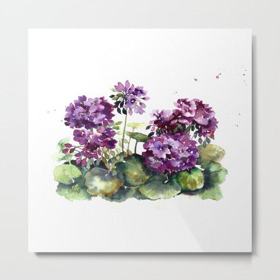 Purple violet pelargonium geranium flowers watercolor Metal Print