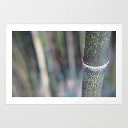 Bamboozal Art Print