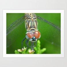 dragonfly 2015 V Art Print