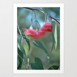 Eucalyptus Silver Princess Blossoms V Art Print