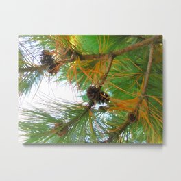 Beautiful fir tree branch with cones Metal Print