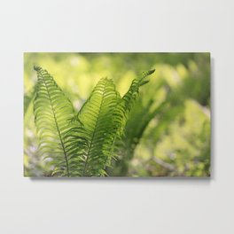 Delicate Green of Ferns Metal Print