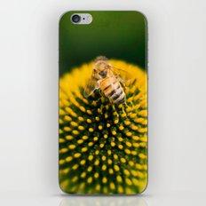bee ball iPhone & iPod Skin