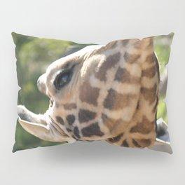 Baringo Giraffe Pillow Sham