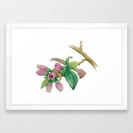 Watercolor Huckleberry Blossoms Framed Art Print