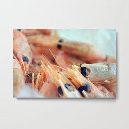 Fresh Shrimp II Metal Print
