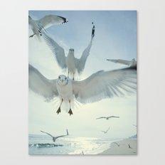 Seagulls {Five} Canvas Print
