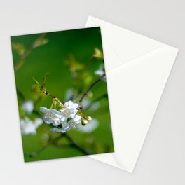 white blossom Stationery Cards