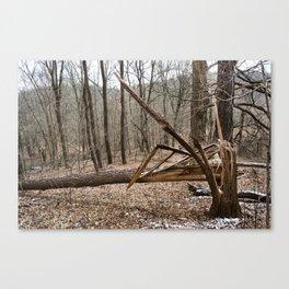 Pleasant Valley Park - Split Tree Canvas Print