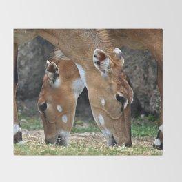Persian Gazelle Throw Blanket