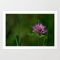 clover Art Prints featuring Clover by Dorothy Pinder