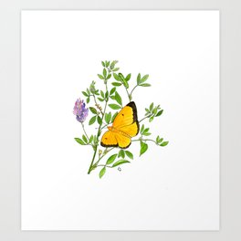 Clouded Sulfur Art Print