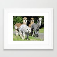 alpaca Framed Art Prints featuring Alpaca by Gary Grady