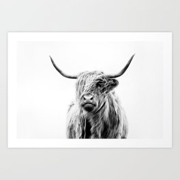 portrait of a highland cow (horizontal) Kunstdrucke