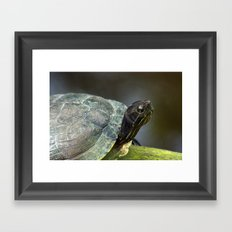 Turtle on a Log Framed Art Print