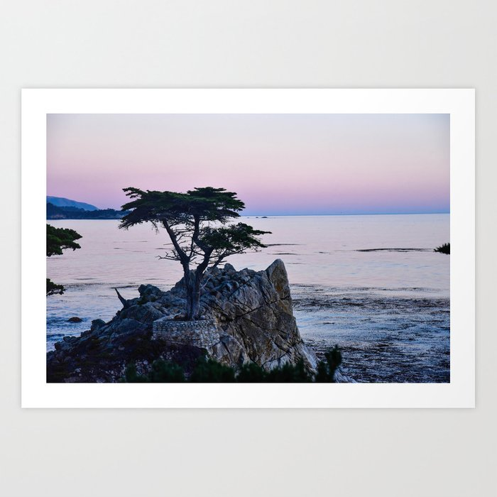 Lone Cypress at Sunset Kunstdrucke