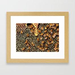 Sweet Honey Harvest Framed Art Print