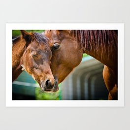 Momma Horse Embraces Her Colt Art Print