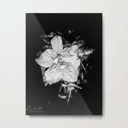 Tanto Amor IV Metal Print