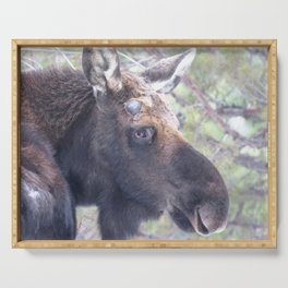 Watercolor Moose Bull 06, The Shnoz Serving Tray