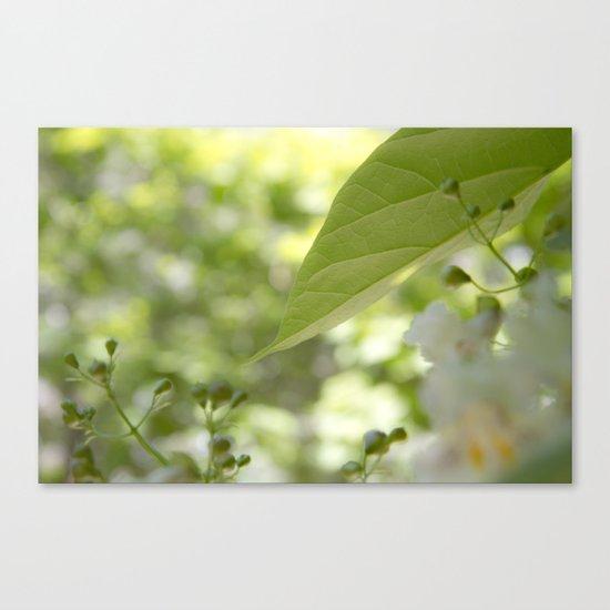 green moments Canvas Print