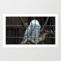 hedwig Art Prints featuring Hedwig by CPKC27