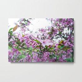 Crabapple Tree Flowers Metal Print