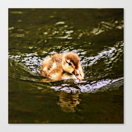 Lovely Duckling Canvas Print
