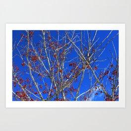 Winter Scene - Red, White, and Blue Art Print