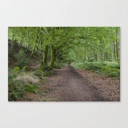 Blackborough woodland Footpath Canvas Print
