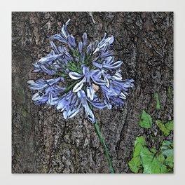 Blue Agapanthus Flower Canvas Print