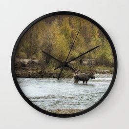 Moose Mid-Stream - Grand Tetons Wall Clock