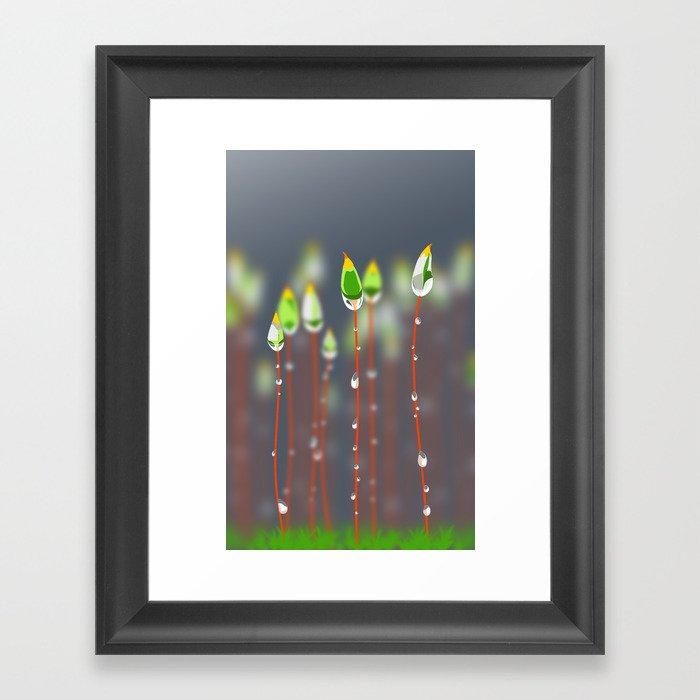 Calyptrae & dew Framed Art Print
