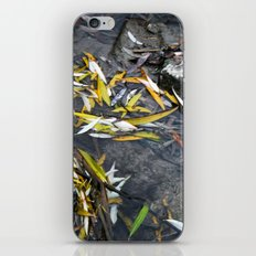 Sirenity iPhone & iPod Skin