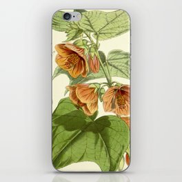 Abutilon darwinii iPhone Skin
