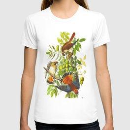 American Sparrow Hawk James Audubon Vintage Scientific Illustration American Birds T-shirt