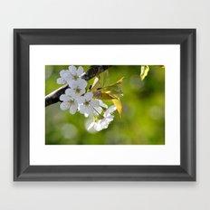 Light of spring - photography Framed Art Print