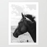 Horse Portrait - Black and White Art Print
