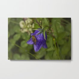 Bluebell Photography Print Metal Print