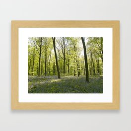 Springtime at Itchen Wood Framed Art Print