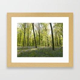 Springtime at Itchen Wood Framed Art Print